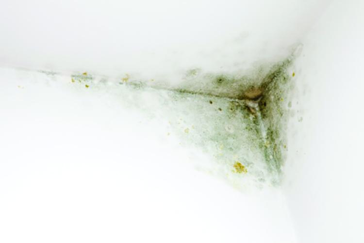 تصویر از شناسایی و جلوگیری از ایجاد قارچ در خانه