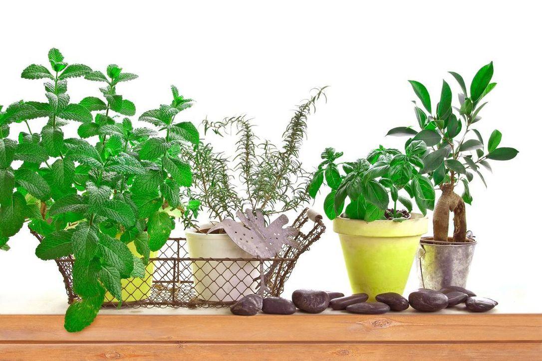 تصویر از گیاهان تان را بر اساس ماه تولدتان انتخاب کنید