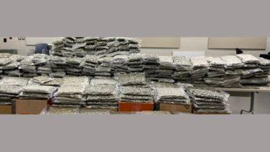 تصویر از پلیس مواد مخدر : کشف بیش از 500 پوند ماریجوانا و دستگیری 6 نفر در تورنتو