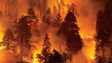 تصویر از آتش نشان های بریتیش کلمبیا به کمک آتش نشانان ایالات متحده شتافتند