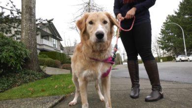 """تصویر از نگهداری سگی که طبق قانون آپارتمان نشینی """" قد بلند """" تلقی میشود در کاندو ممنوع است"""