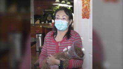 یک زن اهل ریچموند ، سگ پودل عروسکی خود را از چنگ راکون ها نجات داد