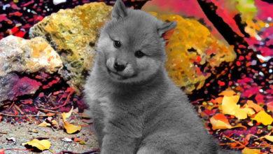 تصویر از جامعه کریپتو ۱ میلیون دلار برای احیاء توکن فلوکی اینو الهام گرفته از ایلان ماسک خرج کرد